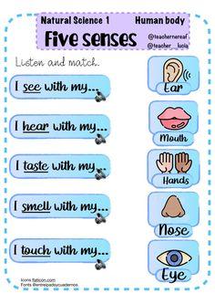 Human body: Five senses worksheet