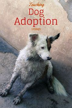 Dog Videos: Beautiful Rescue & Adoption Stories: These beautiful dog videos about rescue stories and adoptable dogs looking for their Forever Home are sure to touch your heart. Plus see how you can help! Rescue Dogs, Pet Dogs, Dog Cat, Pets, Doggies, Funny Dog Videos, Funny Dogs, Adoption Stories, Animal Rescue Stories