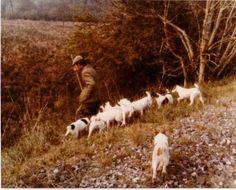 Eddie chapman. The working jack russel terrier