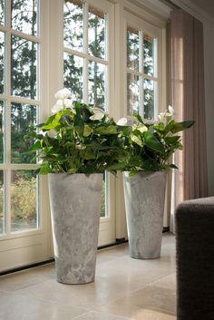 Artstone Plantenbak Claire Kopen? Bestellen Online Bij Haxo.nl