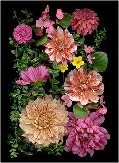 Les Fleurs Multicolores, Multicolscanner photography, Botanical... - Scanner Photography By Ellen Hoverkamp