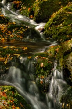 Dickson Falls, Fundy National Park, New Brunswick - In the dense forest, the falls cascade (like falls always do) and the brook babbles along through mossy rocks in the deep gorge. In autumn, those mossy rocks tend to be covered with colourful leaves.  http://annemckinnell.com/2011/10/24/dickson-falls-fundy-national-park/ #photography #travel #newbrunswick #blog