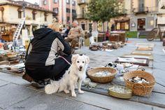 cane che parla - mi piace fotografare i cani e il loro punto di vista