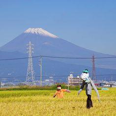 初冠雪のストック写真より カカシの夫婦と雄大な富士山 by sugichanz