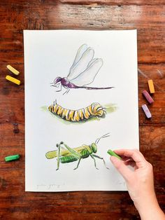 A dragonfly, caterpillar and a grasshopper gathered in the garden. Original paintings & art prints. Illustrations and paintings of all things happy. Watercolour painting and pastel artwork, New Zealand artist. Watercolor Print, Watercolour Painting, Watercolors, Your Paintings, Original Paintings, Pastel Artwork, Framed Art Prints, New Art, Illustrations
