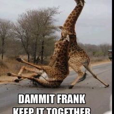 Keep it together Frank!!