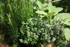 Banho de Ervas - O poder da Natureza Os banhos de ervas são indicados para vários fins,abrir caminhos, descarrego, limpeza espiritual, atrair sorte, atrair