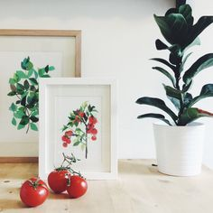 Tomato Plant art print Limited edition by CloverRobin on Etsy