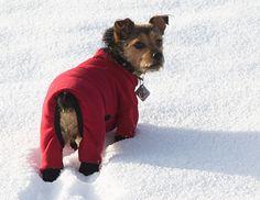 Red Polartec Power Stretch Dog Snowsuit Turtleneck Barkandstuff.com Blue Power Stretch Snowsuit [Red StretchTurtle] - $46.95 : Bark And Stuff, Dog Coats and Snowsuits for dogs