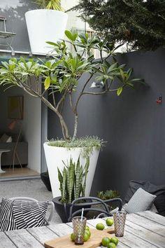 amenagement-terrasse-exterieur-mobiliers-d-extérieur-moderne-pour-le-jardin-moderne. Back Gardens, Small Gardens, Outdoor Gardens, City Gardens, Outdoor Pots, Modern Gardens, Garden Modern, Modern Patio, Modern Landscaping