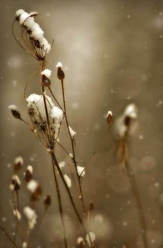 OFF Sale Winter photograph, queen annes lace print, home decor, Limited… Winter Diy, Winter Snow, Winter Magic, Winter White, Fine Art Photography, Nature Photography, Winter Photography, Queen Annes Lace, Winter's Tale