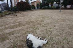 Once gatos y dos perros muertos en el barrio de Santa Ana de Linares, envenenados