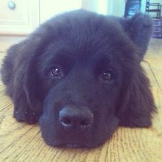 newfie :) our professional area rug