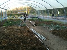 The Lone Ranger comes to Hopwood Kitchen Garden