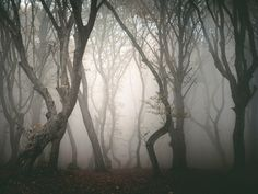 Some of the most haunted places in the world are in Romania. Romania is full of spooky spots, haunted places and monsters like Dracula and Dracula's castle. Haunted Tree, Haunted Forest, Haunted Woods, Haunted Houses, Most Haunted Places, Spooky Places, Vampires, Hoia Baciu Forest, Comte Dracula