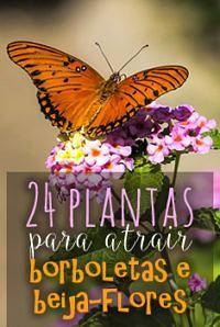 Foto de Kool Cats Photography24 plantas paras atraer mariposas y abejas