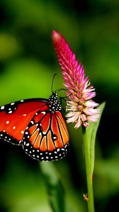 """""""May the wings of the butterfly kiss the sun and find your shoulder to light on, to bring you luck, happiness and riches. Today, tomorrow and beyond"""". ~ Irish Blessing"""