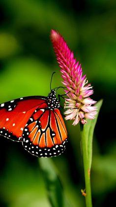 .Orange Butterfly #getinsync #butterfly