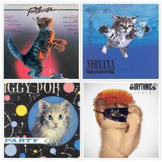 """The Kitten Covers """"Legendary albums from a world dominated by kittens"""" > http://thekittencovers.tumblr.com/"""