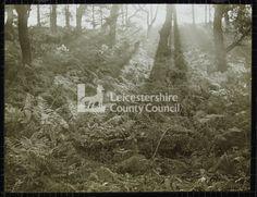 LS1236 - Bardon Hill, trees and bracken