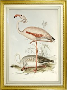 No.421 Brown Pelican Audubon Print Repro Havell Edition Double Elephant Folio