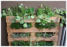 After my ducks ate up all my lettuce in my square foot garden, I got to thinking that I should grow lettuce OUT of their reach!  diy build your own herb garden indoor hanging easy simple step by step kitchen
