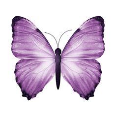 Nebom_hranimaya - album 'Scrapbook / A little piece of you »to... ❤ liked on Polyvore