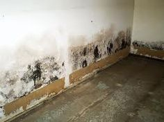 how to clean mold off basement concrete walls clean house rh pinterest com