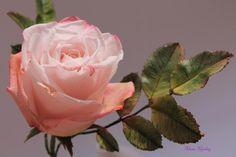 rose)) - Cake by Elena Ujshag Sugar Rose, Sugar Flowers, Paper Flowers, Baileys Cake, Rose Cake, Paper Clay, Cold Porcelain, Gum Paste, Amazing Flowers