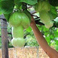 Funny things lookike penis #crazyrhings