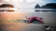 Pink starfish on beach