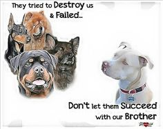 Its the owners not the breed!