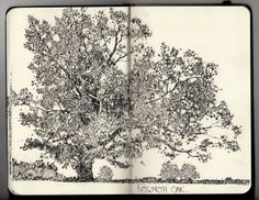Ian Sidaway Fine Line tree sketch art