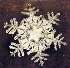 In 1885, nineteen-year-old Wilson A. Bentley took his first successful photomicrograph of a snow crystal. He went on to capture over 5000 such images before he died on Dec. 23, 1931, after walking six miles in a blizzard in order to photograph more snowflakes.