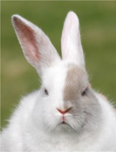 ♥ Bunny disapproves!