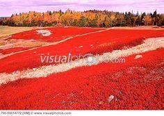 Dreams And Colour: New Brunswick Canada in Fall