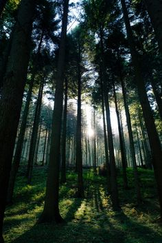 Into the forest - null