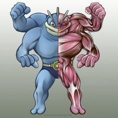 Machamp Anatomy by Christopher-Stoll