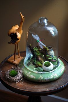 Miniature Garden under cloche