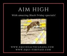 Equi-First Aid USA offers a variety of equine health and safety training courses. First Aid Course, Early Black Friday, Emergency First Aid, Safety Training, Continuing Education, Health And Safety, Training Programs, Confident, Announcement