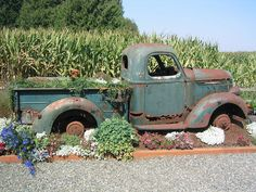 These trucks & cars are gorgeous! Some of them are adorned with beautiful flowers, in their retirement.