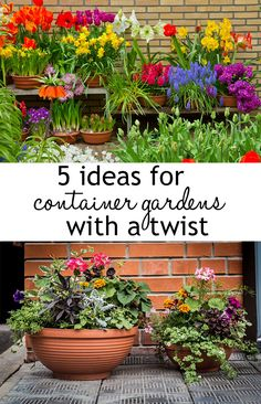 Create striking container gardens that have real impact! They are ideal for growing plants where there is no soil, on patios or driveways