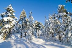 The woods near my home in Rauma, always love to go there to see true Finnish nature, winter and summer See True, Finland, Woods, Wonderland, To Go, Spaces, Winter, Nature, Outdoor