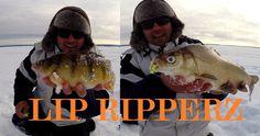 Lip Ripperz How To: Ice Fishing Jumbo Perch and Whitefish #lipripperz #fishing #icefishing #whitefish #perch #yellowperch #jumboperch