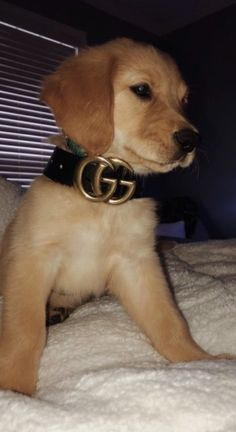 Champion Dogs: German Shepherd: Golden Retriever: Labrador Retriever: Beagle: Siberian Husky: Pit Bull Terrier: Chihuahuas: Pomeranian: Dog Tips and Ideas: Cute Baby Dogs, Cute Dogs And Puppies, I Love Dogs, Cute Babies, Doggies, Puppies Puppies, Cute Funny Animals, Cute Baby Animals, Animals And Pets
