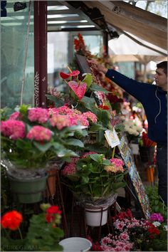 Flowers at Las Ramblas / La Rambla – Shopping paradise or tourist attraction and hotspot? Barcelona, Spain #Barcelona