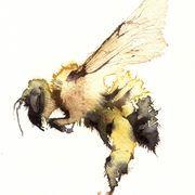 solo bumble KO12 Kate Osborne Watercolor Animals, Watercolor And Ink, Watercolor Paintings, Watercolors, Illustrations, Illustration Art, Insect Art, Bee Art, Watercolor Techniques