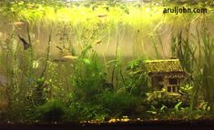 20 gallon Walstad tank with step by step instructions for how to set up.