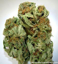GLOBAL EXPERTS SUPPLIERS  Text..+17018907617  Website....www.christevecannabishop.com email.....info@christevecannabishop.com