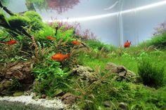 """""""Les gardiens des âmes perdues"""" par Jojo 1/2 #aquascaping #fishtank #aquarium"""
